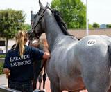 Saubouas Stud - slideshow